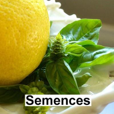 Semences Fines herbes basilic citronne