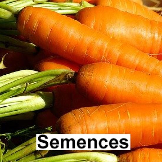Semences Carotte nantes ecarlate