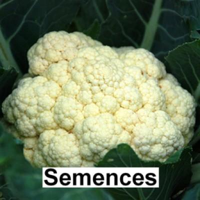 Semences Chou fleur boule de neige hatif