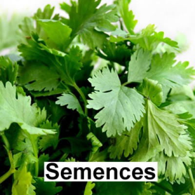 Semences Coriande