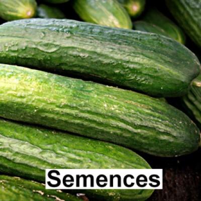 Semences Concombre straight eight