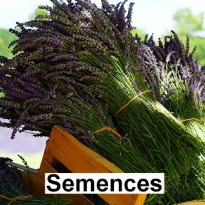 Semences Fines herbes lavande