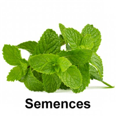 Semences Fines herbes menthe