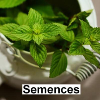 Semences Fines herbes menthe poivré