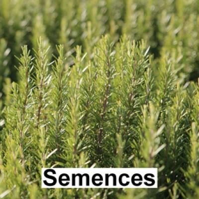 Semences Fines herbes romarin