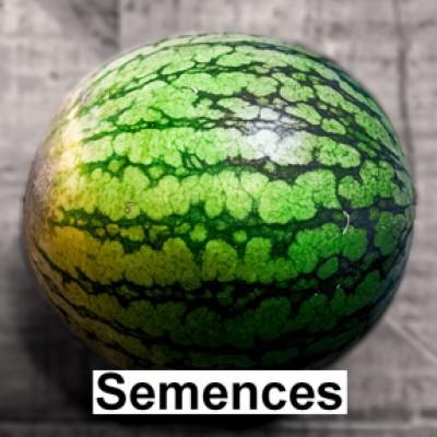 Semences Melon d'eau sugar baby