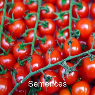 Semences Tomate super sweet hybride